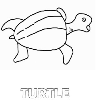 turtle animal coloring page