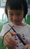 girl playing with stick insect