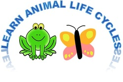 hands-on activities to learn about animal life cycles
