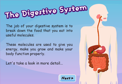 learn about digestive system game