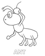 ant animal coloring page