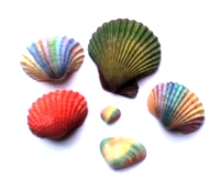 shells painting as kinesthetic activities