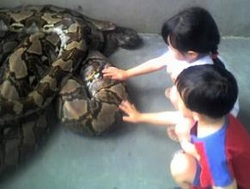 children petting python snake